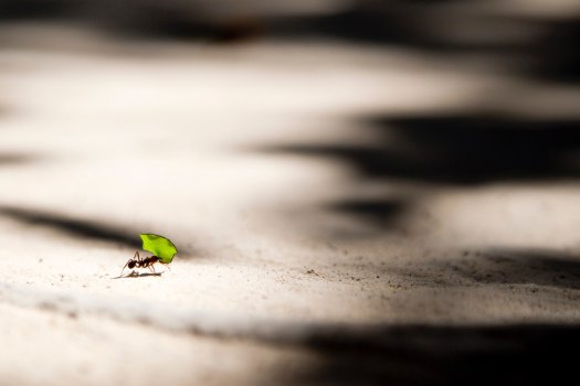 vlad-tchompalov-perseverança-unsplash